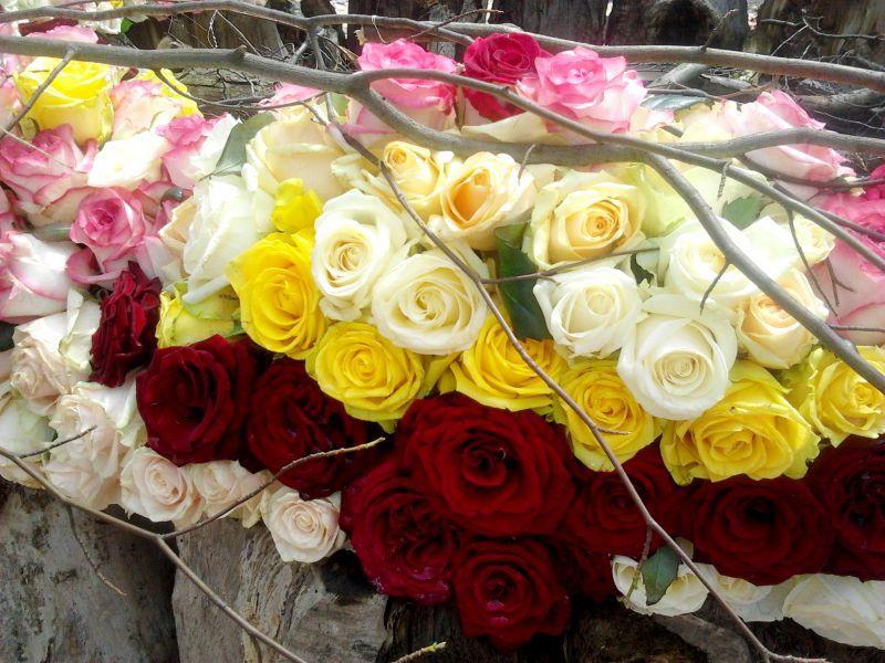 Відео з фестивалю квітів в замку Сент-Міклош в Чинадієві