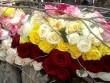 Фестиваль квітів у Чинадієві: як це було