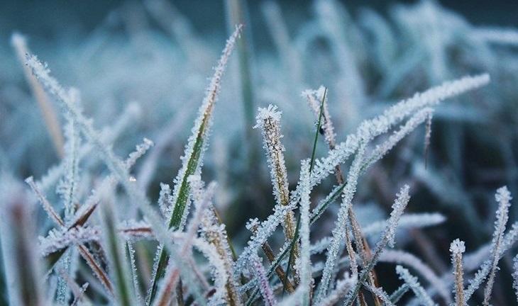 У гірських районах Закарпаття 7-9 травня прогнозують заморозки