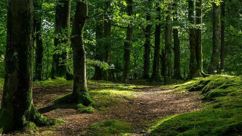 В Ужгороді шукали жінку, яка заблукала у лісовому масиві мікрорайону Горяни