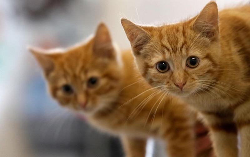 В одному з готелів на Міжгірщині мешкає більше сотні котів