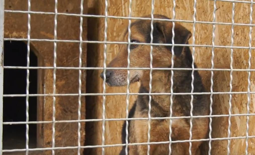 У Мукачеві собака погриз ногу своєму господарю
