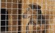 У Мукачеві домашній собака накинувся на господаря та пошматував йому ногу