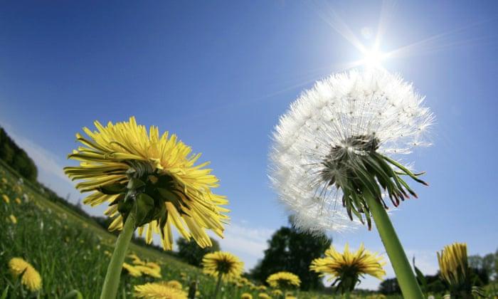 Синоптики прогнозують потепління на Закарпатті з 12 травня