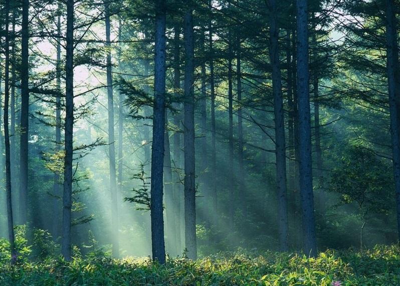 На Закарпатті у лісі біля села Костилівка раптово помер 25-річний хлопець