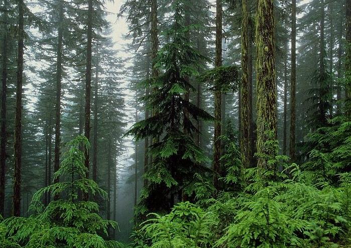 У лісах Рахівщини травмувалася туристка із міста Дніпро