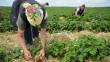 Пенсія для заробітчан: на що можуть розраховувати українці та як отримати пенсію країни ЄС