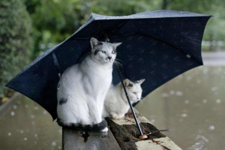 Прогноз погоди на 18 та 19 травня