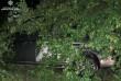 Чоловік скоїв аварію біля Мукачева, тікаючи від патрульних