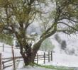 Посеред травня на Закарпатті випав сніг