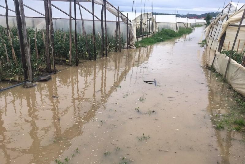 Підтоплені дворогосподарства, зруйнований міст та сільгоспугіддя у воді: наслідки травневої негоди на Закарпатті