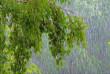 У Закарпатській області очікується погіршення погоди: синоптики прогнозують дощі з градом