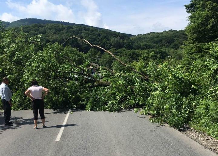 Величезне дерево впало на дорогу М-23 Берегово - Виноградів - Велика Копаня і перекрило автомобільний рух