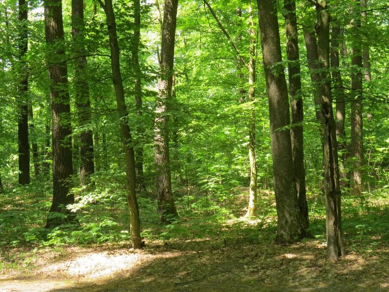У лісі біля села Сімер знайшли травмованого чоловіка
