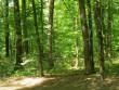 Селяни знайшли у лісі травмованого чоловіка