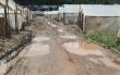 У Виноградівському районі після паводку заново почали висаджувати городину