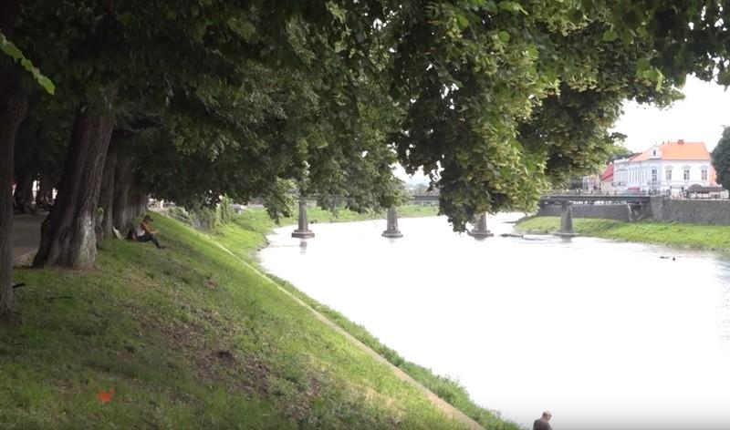 В Ужгороді на набережній Незалежності розквітла одна з найдовших липових алей Європи