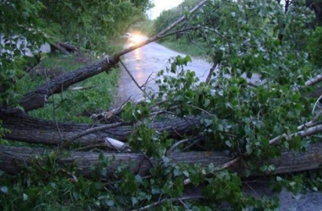 Величезне дерево впало між селами Кушниця і Бронька і перекрило дорогу