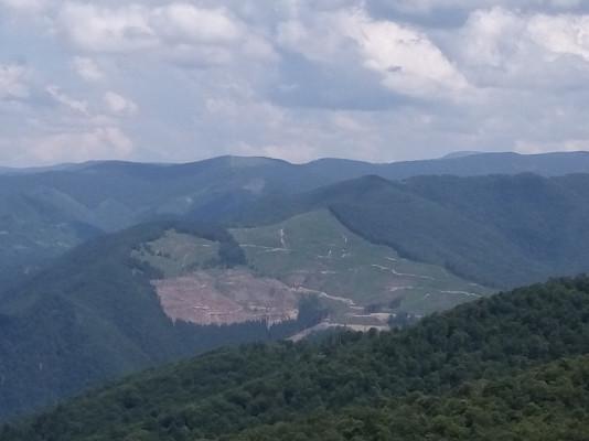 Відпочивальник показав масштаби вирубки лісу на Закарпатті
