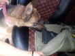 Службовий собака винюхав гвинтівку у машині