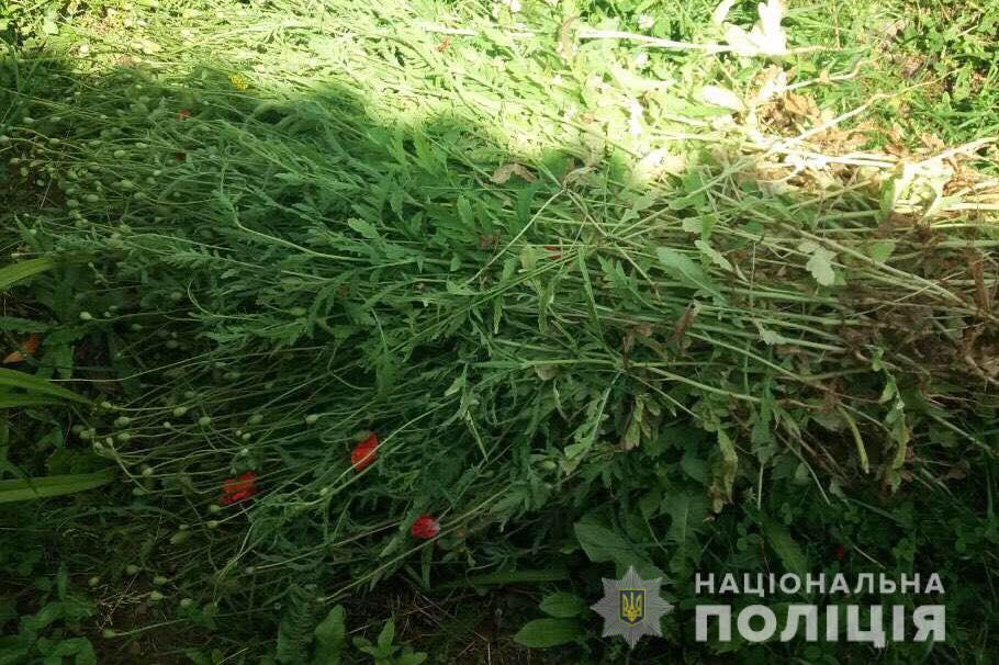 У селі Герцівці на Мукачівщині виявили посіви снодійного маку