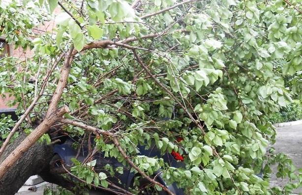 Під час негоди гілки дерев впали на машини