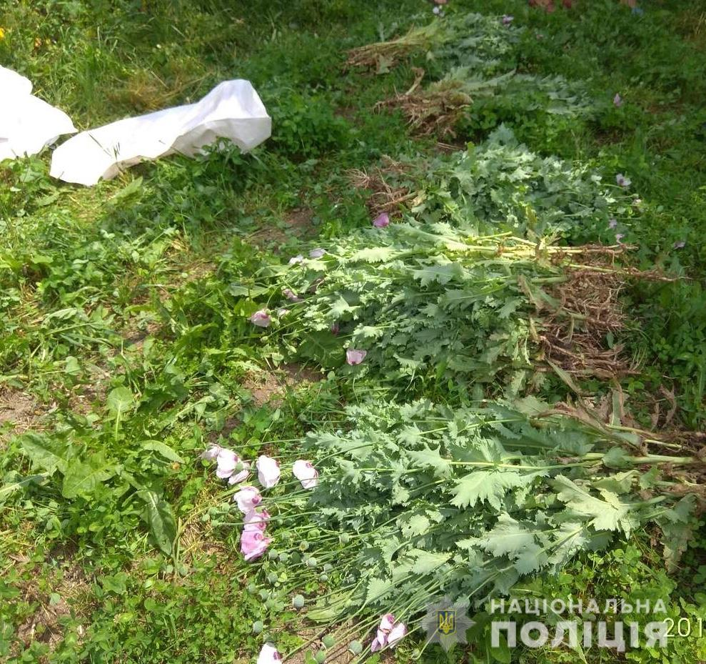 Поліцейські виявили незаконні посіви маку в трьох районах Закарпаття