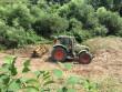 У Мукачеві береги Латориці очищають від борщівника