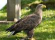 Дослідження орнітологів на Закарпатті завершилися сенсацією