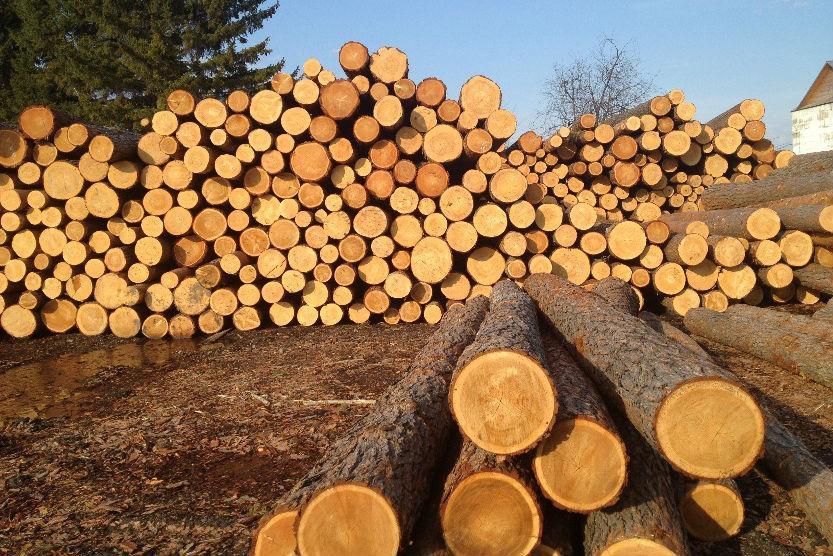 Більшість прохідних партій після виборів готові замінити мораторій на експорт лісу-кругляка