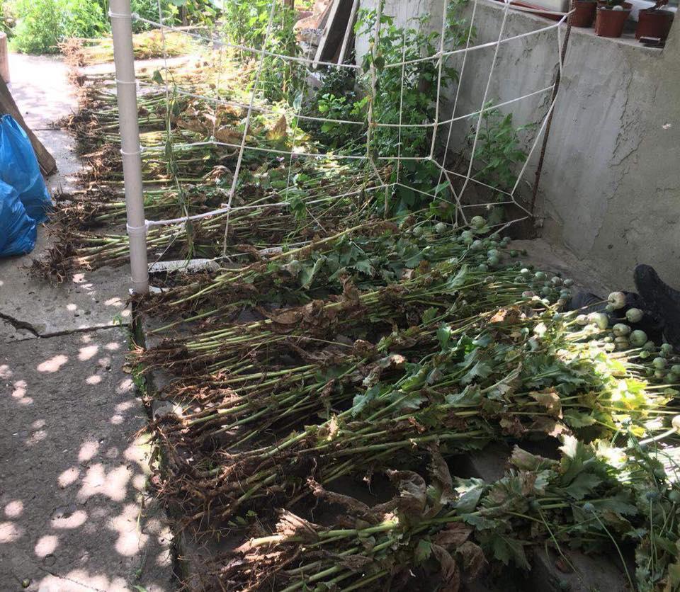 Поліція Перечинщини виявила незаконні посіви маку снотворного