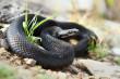 Як вберегтися від укусу змії