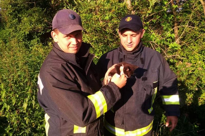 Чоловіки врятували маленьке кошеня, яке потрапило в пастку