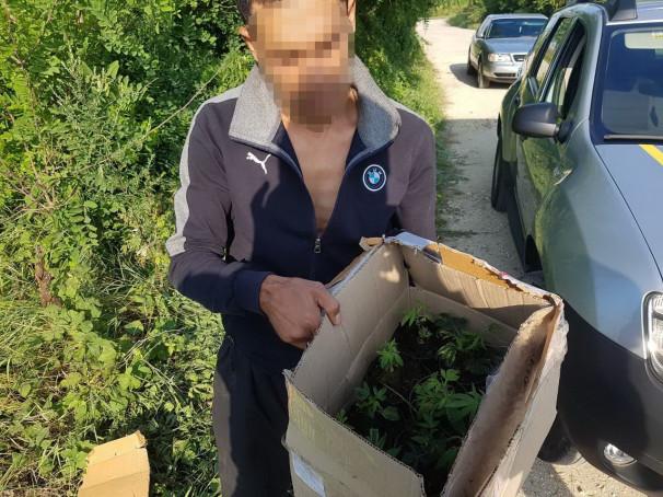 Поліція затримала чоловіка, який ніс в коробці саджанці забороненої рослини