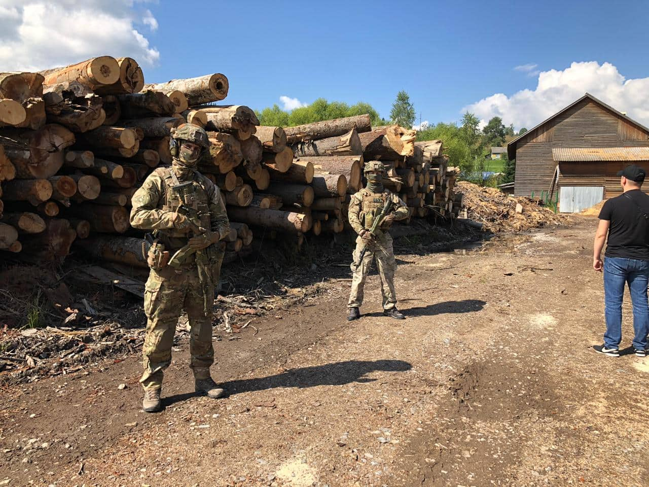 """СБУ провела обшуки у лісівника та на кількох підприємствах і виявила значну кількість """"лівої"""" деревини"""