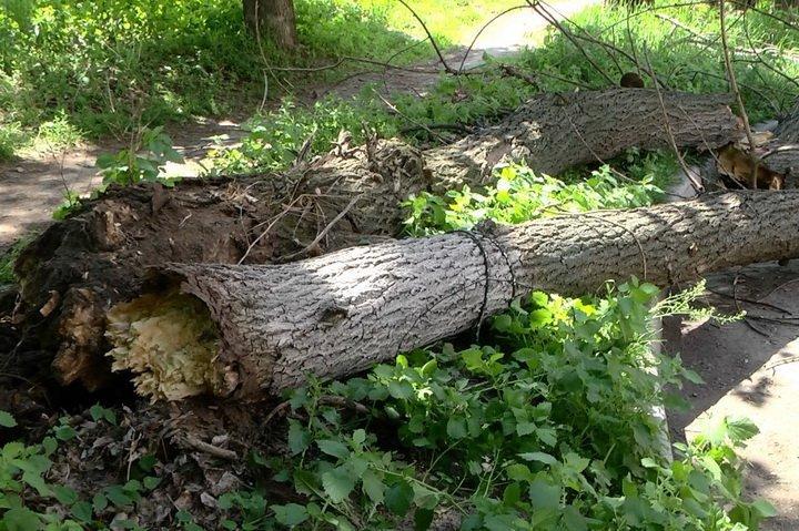 На Рахівщині дерево впало на машину