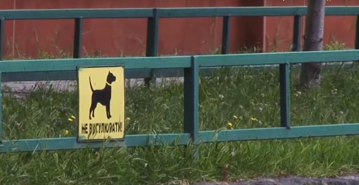 В Мукачеві на дитячих майданчиках вигулюють собак