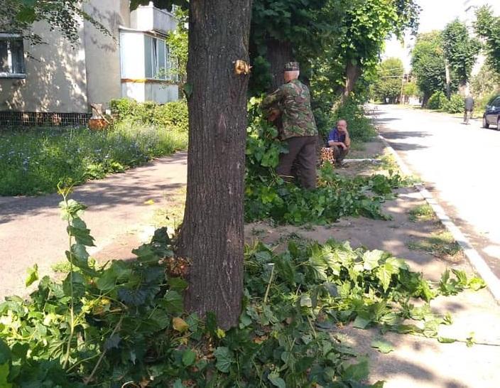 У Мукачеві проводять пінцирування дерев