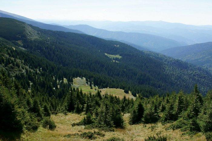 В області припинили незаконну схему розкрадання деревини у Карпатському біосферному заповіднику