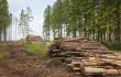 Посадовці організували незаконну вирубку лісу