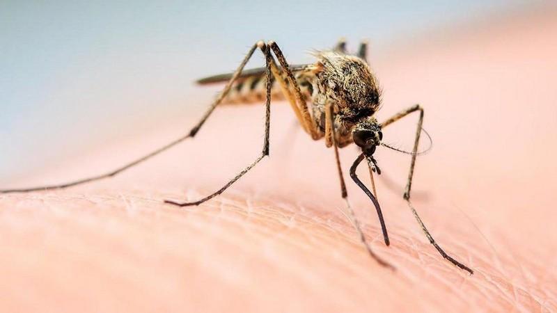 Комарі атакують: закарпатців попереджають про небезпеку