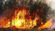 В області оголосили надзвичайну пожежну небезпеку