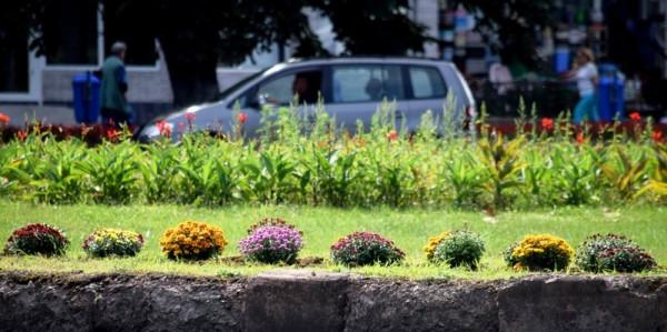 В Ужгороді висаджують перші осінні квіти