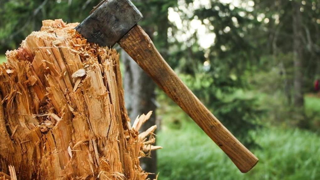На Рахівщині чоловік попався на незаконній вирубці дерев