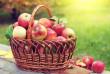 Яблучний Спас: що можна і чого не можна робити в цей день