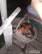 На Воловеччині ножем поранили мукачівця