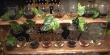 Поштовх до туризму та додаткові робочі місця: як на Закарпатті розвивається виноробство