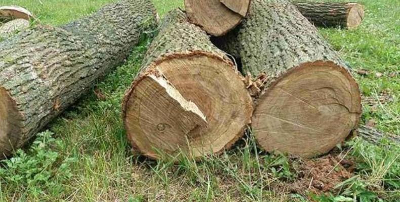 Двоє закарпатців постануть перед судом за незаконну вирубку дерев