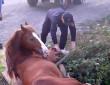 В Ужгороді врятували коня, який потрапив у пастку