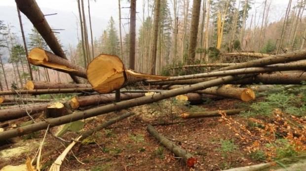 На Тячівщині за 5 місяців незаконно вирубали лісу на майже 4 мільйони гривень